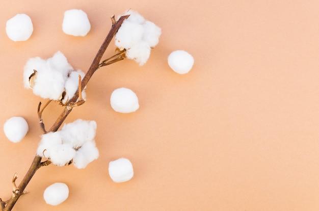 Moldura de vista superior com flor de algodão no galho Foto gratuita