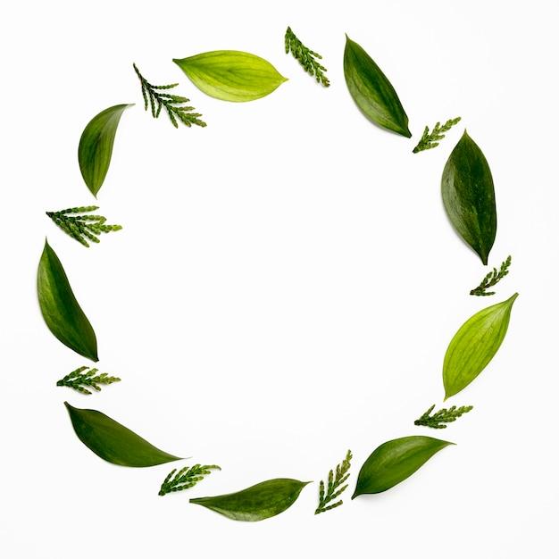 Moldura de vista superior com folhas verdes Foto gratuita