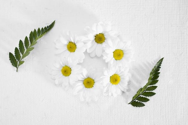 Moldura de vista superior feita de margaridas e folhas Foto gratuita