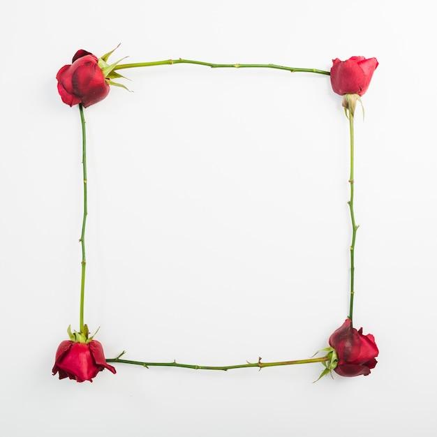 Moldura feita com rosas sobre fundo branco Foto gratuita