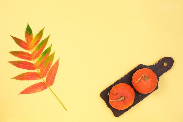 Moldura feita de abóboras flores secas folhas cor de fundo de papel Foto Premium