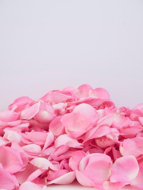 Moldura feita de pétalas de rosa cor de rosa Foto Premium