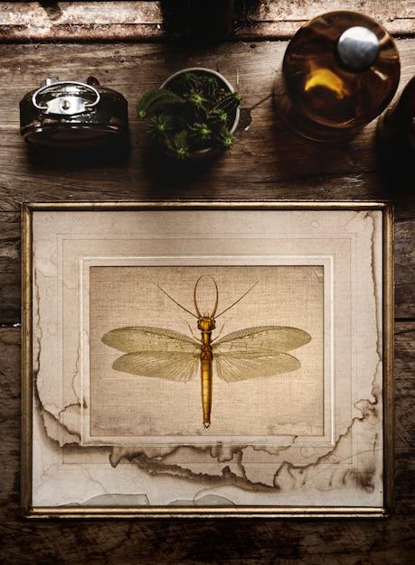 Molduras para fotos para casa decoração de interiores Foto Premium