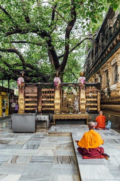 Monge budista indiano em meditação perto da árvore bodhi Foto Premium