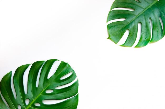 Monstera deixa folhas com isolar sobre fundo branco Foto Premium