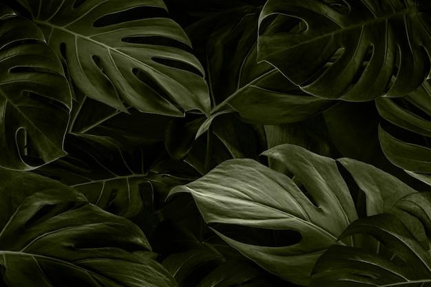 Monstera deixa o papel de parede da natureza Foto gratuita
