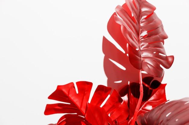 Monstera vermelho deixa no fundo branco Foto gratuita