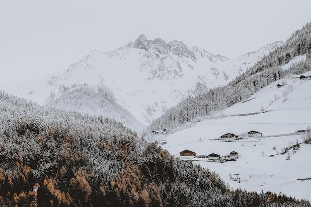 Montanha coberta de neve perto da floresta Foto gratuita