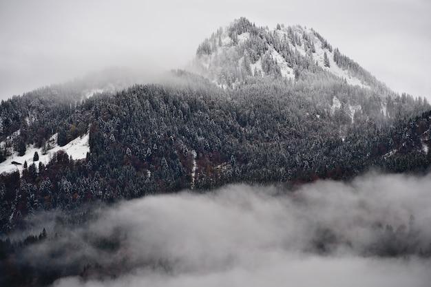 Montanha densamente arborizada com abetos cobertos de neve cercados por nuvens nos alpes Foto gratuita