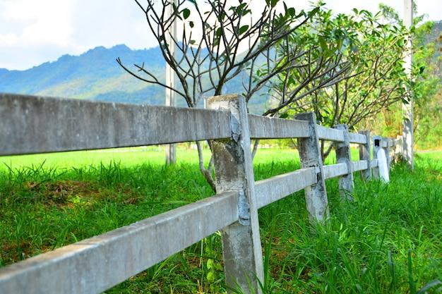 Montanhas blue ridge e vinhedo Foto Premium