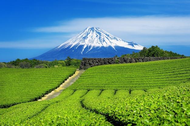 Montanhas fuji e plantação de chá verde em shizuoka, japão. Foto gratuita