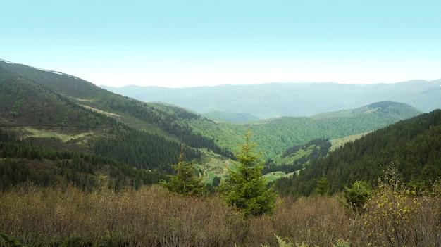 Montanhas verdes Foto Premium