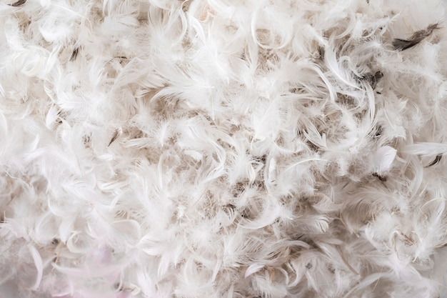 Montão de penas de aves Foto gratuita