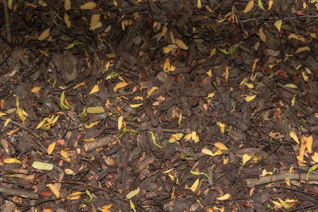 Resultado de imagem para monte de folhas