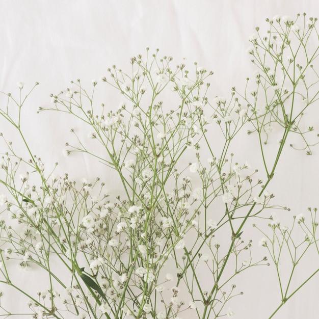 Monte de galhos de plantas verdes finas com flores Foto gratuita