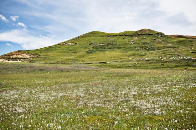 Monte verde com flores brancas Foto gratuita