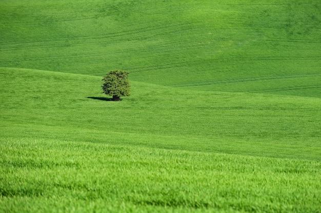 Moravian tuscany - paisagem bonita da mola em moravia sul perto da cidade de kyjov. república checa - e Foto gratuita