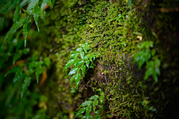 Mos na floresta tropical Foto Premium
