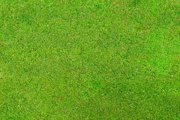 Mos verde para o fundo. Foto Premium