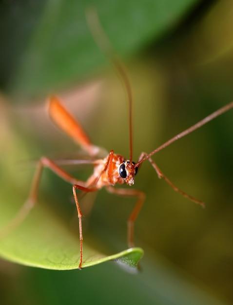 Mosquito tropical Foto Premium