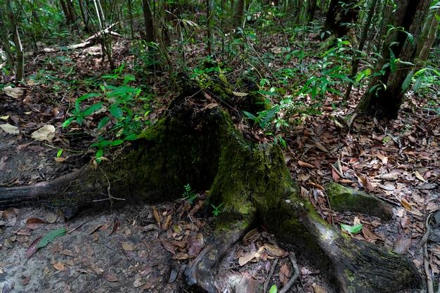 Moss na árvore morta Foto Premium