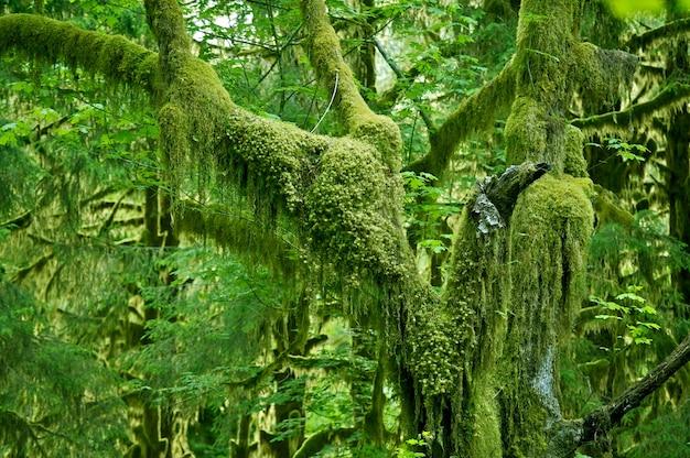 Mossy tree Foto gratuita