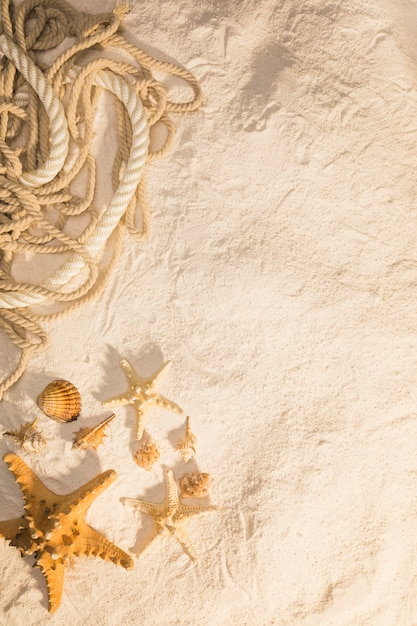 Motivo marinho com cordas e criaturas do mar Foto gratuita