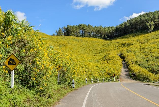 Moutain de florescência selvagem do girassol mexicano no dia ensolarado com a estrada da curva Foto Premium