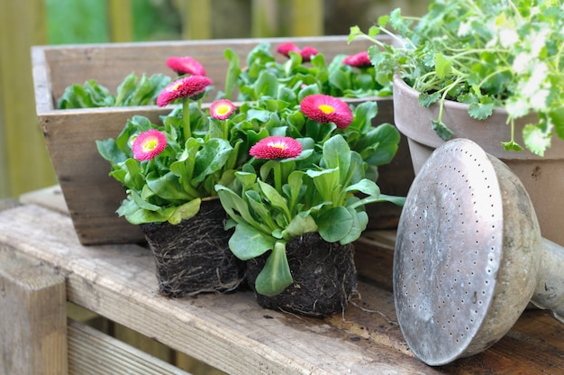 Mudas de flores, vasos e ferramentas de jardim Foto Premium