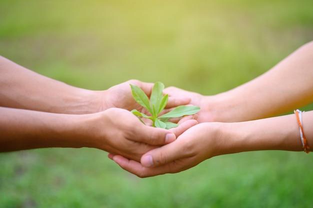 Mudas de folhas verdes colocadas nas mãos dos homens Foto Premium