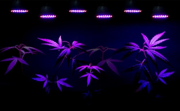 Mudas de plantas que crescem em vaso com led crescem luz Foto Premium