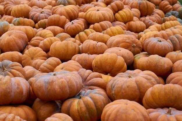 Muitas abóboras alaranjadas aguardam venda no mercado de vegetais Foto Premium