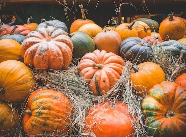 Muitas grandes abóboras alaranjadas encontram-se na palha. colheita do outono das abóboras preparadas para o feriado. Foto Premium