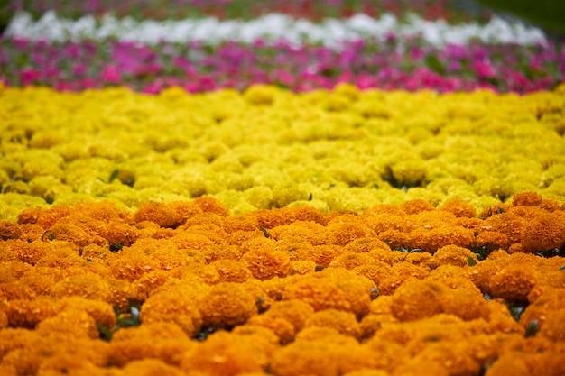 Muitas mudas brilhantes de flores Foto Premium