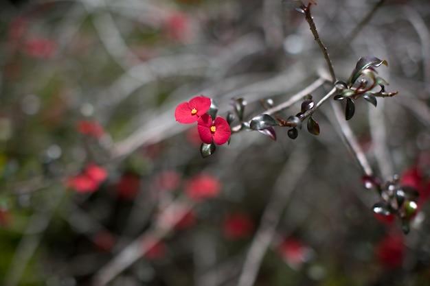 Muitas pequenas flores vermelhas nos galhos de uma árvore tropical Foto Premium
