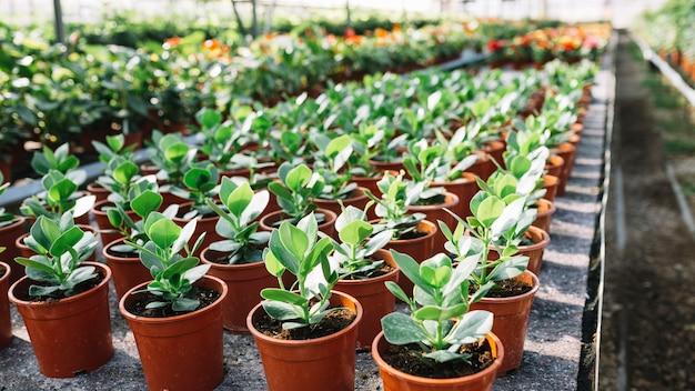 Muitas plantas verdes frescas na panela Foto gratuita