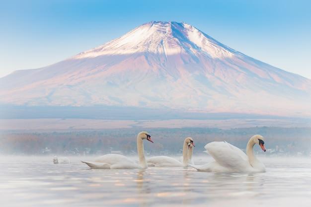 Muito bonito casal branco cisne sentindo romântico e amor no lago yamanaka com o monte. background fuji Foto Premium