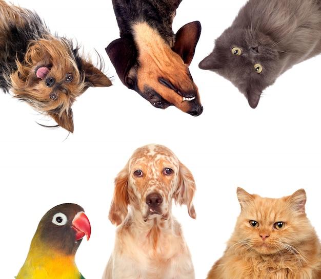 Muitos animais de estimação isolados Foto Premium