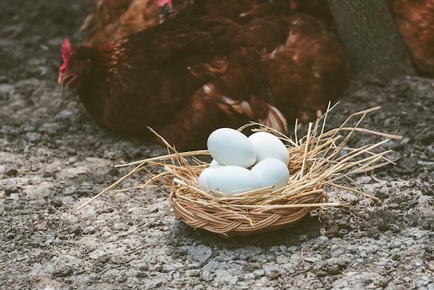 Muitos ovos com casca branca em uma cesta de vime que é coberta com feno no chão Foto Premium