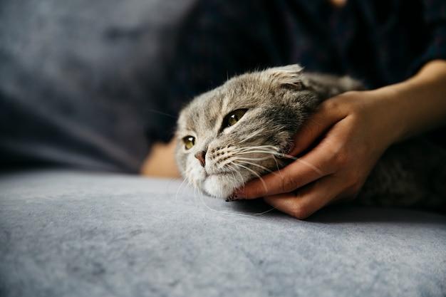 Mulher, acariciando, cute, preguiçoso, gato Foto gratuita