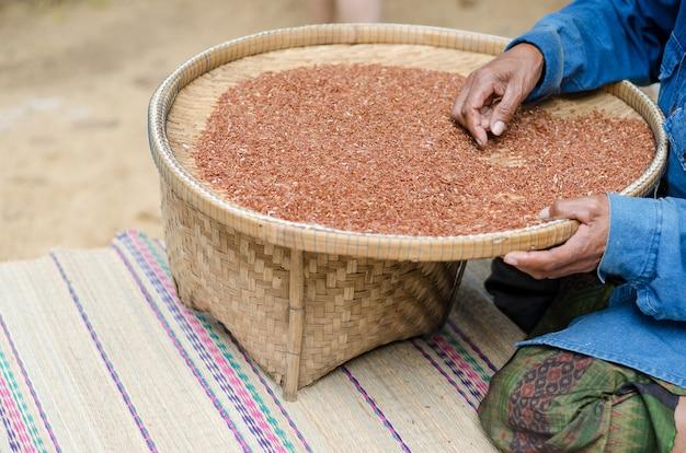 Mulher adulta que seleciona a semente da arroz-baga após a secagem no sol. Foto Premium