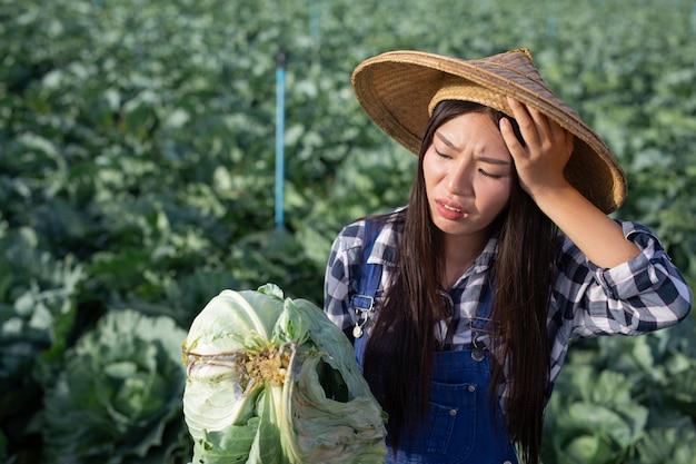 Mulher agrícola que está com dor de cabeça por causa de seu repolho podre. Foto gratuita