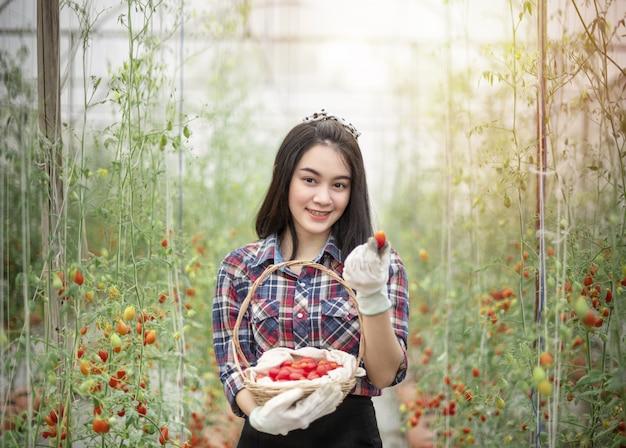 Mulher asiática, colher tomates Foto Premium