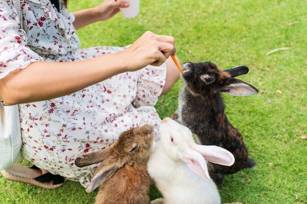 Mulher asiática nova alimentando coelhos com uma cenoura no gramado verde. Foto Premium