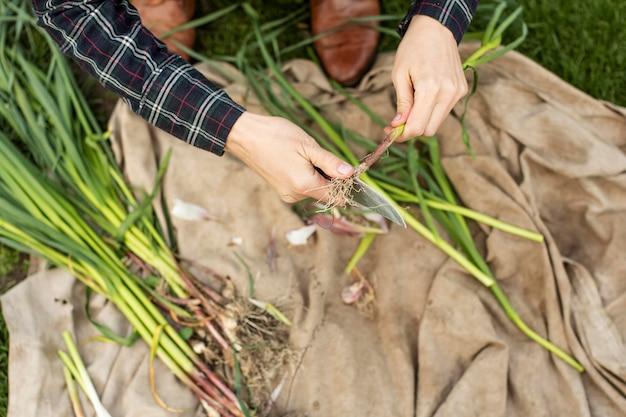 Mulher colhendo legumes Foto gratuita
