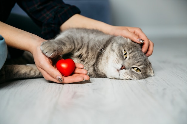 Mulher, com, coração decorativo, petting, gato Foto gratuita