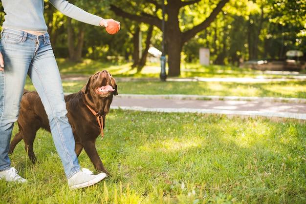 Mulher, com, dela, cão, andar, em, jardim Foto gratuita