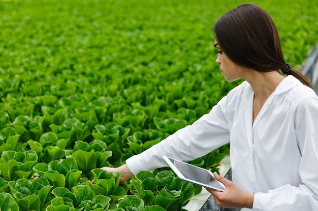 Mulher de manto de laboratório branco examina salada e repolho em uma estufa usando um tablet Foto gratuita
