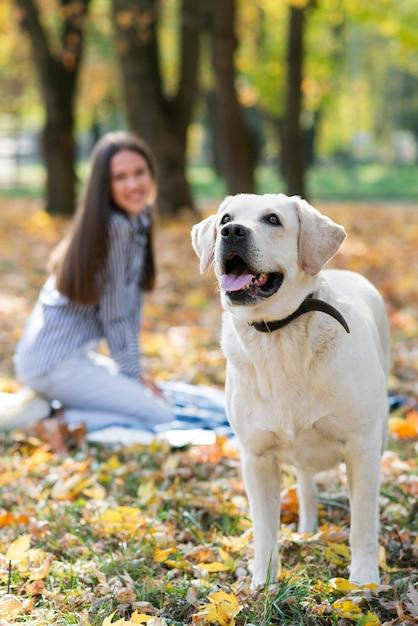 Mulher feliz com labrador fofo no parque Foto gratuita