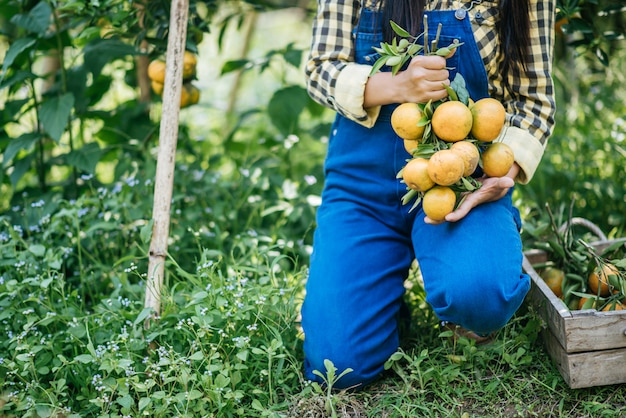 Mulher havesting plantação de laranja Foto gratuita